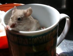 mouse-mug